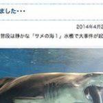 水槽内のサメがサメを飲み込もうと……茨城県大洗水族館で起きた事件 – はてなブックマークニュース