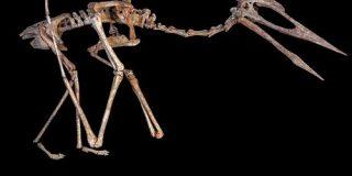 巨大翼竜は飛べなかった? 島で独自に進化か | ナショナルジオグラフィック