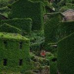 【画像】中国で緑化しすぎの村発見。これはちょっと行ってみたい:キニ速