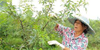 中国の農村発Eコマース 貧困削減の力に:AFPBB