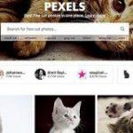 ネコ好きにはたまらない!商用利用無料のネコの写真素材がいっぱいある! -Pexels Cats | コリス