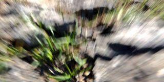 カメラが倒れレンズがお亡くなりになる瞬間、レンズが最後に見た景色が映し出されていた「渾身の一枚」「モンスター現れそう」 - Togetter