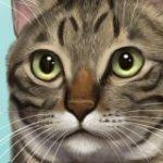 猫さんの毛の流れを図解したイラストのもふもふっぷりがすごいし参考になる「鼻のところが猫のつむじ」 – Togetter