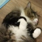 よく猫が脱走するので、近所の野良猫かボス猫に「うちの猫見かけたら帰るように言って」→この結果は偶然ではない説 – Togetter
