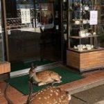 店の前に座り込んで営業妨害する広島ヤクザがヤバすぎる!?「シカらんといてね」「こりゃいけんねぇ。シカるべき処置を」 – Togetter