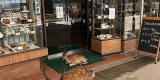 店の前に座り込んで営業妨害する広島ヤクザがヤバすぎる!?「シカらんといてね」「こりゃいけんねぇ。シカるべき処置を」 - Togetter