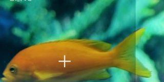 生物にiPhoneをかざすと名前がわかるアプリ「LINNE LENS」、第一弾は魚類中心4000種類 - MdN