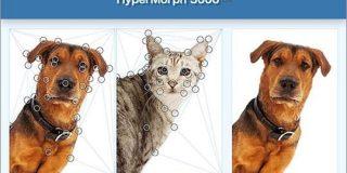 イヌをネコに変形!映画やテレビでよく見かけるモーフィングを作成できるオンラインツール -HyperMorph 3000 | コリス