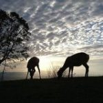 アフリカの写真だと言われたら信じてしまいそうな日本の風景写真が話題に「だまされた(笑)」「よく見たら鹿だ」 – Togetter