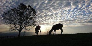 アフリカの写真だと言われたら信じてしまいそうな日本の風景写真が話題に「だまされた(笑)」「よく見たら鹿だ」 - Togetter