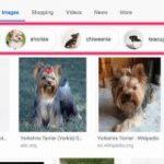 Google、画像検索を改良。権威性と新しさが重要なランキング要因に | 海外SEO情報ブログ