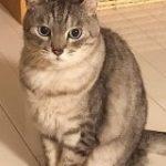 『猫好きはアホなので』から始まる猫好きあるあるがわかりみの塊すぎる「全部わかりすぎて胸が苦しい…」 – Togetter