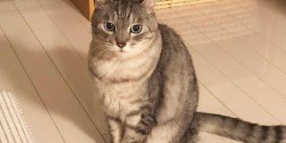 『猫好きはアホなので』から始まる猫好きあるあるがわかりみの塊すぎる「全部わかりすぎて胸が苦しい…」 - Togetter