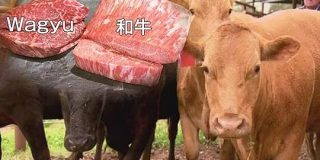 『和牛』に立ちはだかる『Wagyu』|NHK NEWS WEB