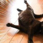 黒猫はインスタ映えしないという説があるらしいけど黒猫さんの可愛さを見て!「日本では本来黒猫は商売繁盛の幸運を呼ぶとして大事にされてきた」 – Togetter