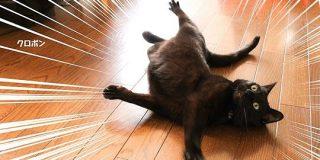 黒猫はインスタ映えしないという説があるらしいけど黒猫さんの可愛さを見て!「日本では本来黒猫は商売繁盛の幸運を呼ぶとして大事にされてきた」 - Togetter