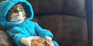 豪州の米国大使館は「猫のパジャマパ―ティーの招待状」を誤って送信したことを謝罪しました - Togetter
