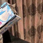 猫さんが『超快適』から抜け出せず困ってしまったのでそっとアピールするご様子「何があったらこうなるの」 – Togetter