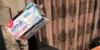 猫さんが『超快適』から抜け出せず困ってしまったのでそっとアピールするご様子「何があったらこうなるの」 - Togetter