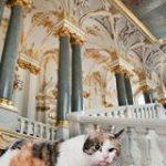ロシア・エルミタージュ美術館でロマノフ朝時代から美術品を代々守り続ける「かわいすぎる警備員」 – Togetter