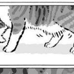 猫さんのお腹の魅惑のたぷたぷ『ルーズスキン』についてよく分かる漫画がかわいい「うちの猫も中々のもの持ってます」 – Togetter
