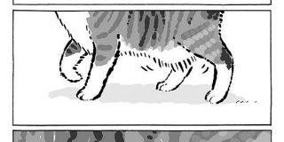 猫さんのお腹の魅惑のたぷたぷ『ルーズスキン』についてよく分かる漫画がかわいい「うちの猫も中々のもの持ってます」 - Togetter