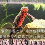 新宿DASHのハート池に絶滅危惧IA類のアカハライモリが生息!→視聴者「あーはいはい、また絶滅危惧種ね」 #鉄腕DASH – Togetter