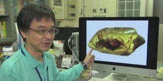 新種の昆虫化石「昆虫好きの俳優」香川照之さんにちなみ命名 | NHKニュース