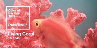 2019年の流行色・トレンドカラーは、かわいい珊瑚色の「Living Coral」HTMLのコードは「#FF6F61」 | コリス
