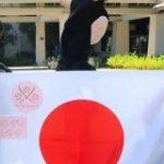 世界最大のロボコン「WRO」で日本の小学生チームが世界8位の快挙-タイから現地レポート – CNET