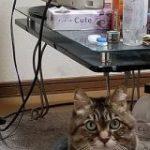 消したはずの電気がなぜか点いてると指摘を受け再度部屋を見たら犯人(猫)発見→そのお姿をご覧ください – Togetter