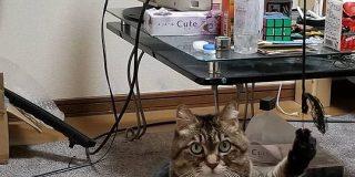 消したはずの電気がなぜか点いてると指摘を受け再度部屋を見たら犯人(猫)発見→そのお姿をご覧ください - Togetter