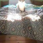 「ネコと和解せよ」以外ぴったり過ぎる後光差すネコの写真がまじで神神しくてひれ伏す人々 – Togetter