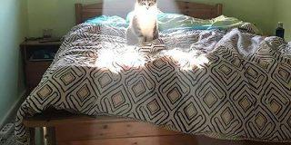 「ネコと和解せよ」以外ぴったり過ぎる後光差すネコの写真がまじで神神しくてひれ伏す人々 - Togetter
