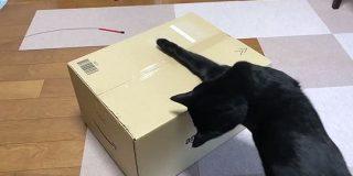 黒猫さんが未開封のAmazonの箱に苦戦するご様子動画「社会風刺にしてはできすぎているしあまりにも愛くるしい」 - Togetter