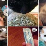 日本の猫用おやつ『ちゅ~る』が海外で猫用コカイン(KittyCrack)と呼ばれている→キメてる海外の猫さんやちゅ~るを頼まれる方も「イギリスニャンコもめっちゃ食いついた」 – Togetter