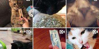 日本の猫用おやつ『ちゅ~る』が海外で猫用コカイン(KittyCrack)と呼ばれている→キメてる海外の猫さんやちゅ~るを頼まれる方も「イギリスニャンコもめっちゃ食いついた」 - Togetter
