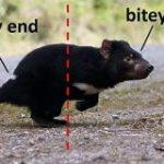 海外で人気の「動物『非科学的』図解」タグ #UnscienceAnAnimal が癒される&楽しい! – Togetter