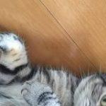 2月22日はにゃんにゃんにゃんの猫の日、Twitter Japanが「猫の写真へたくそ選手権」開催へ | TechCrunch