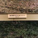 皇居に生息するタヌキのミトコンドリアDNA解析結果が衝撃的!「公務が忙しいのに研究がガチ」「日本のガラパゴス」 – Togetter
