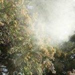 今年もやってきました、花粉の飛散量去年の◯◯倍の季節「ボジョレー・ヌーボーかよ」 – Togetter