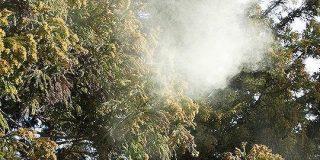 今年もやってきました、花粉の飛散量去年の◯◯倍の季節「ボジョレー・ヌーボーかよ」 - Togetter
