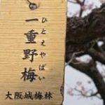 大阪城公園の梅林ですっぴんで慌てるギャルみたいな梅の木を見つけた「一重まぶたになんの恨みが…」 – Togetter