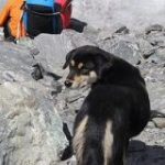 ヒマラヤ登山隊について来た野良犬、そのまま登頂に成功してしまう – IRORIO