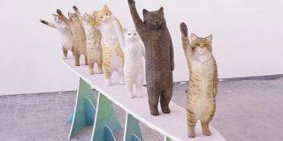 ハイタッチできる猫の彫刻が可愛過ぎてもうこれ猫好きにはたまらない「この顔見て!」「家に置きたい」 - Togetter