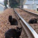 線路に乱入している悪い奴らが複数いた。兄弟かもしれない。「黒い旅団という名の過激派」「とんでもねぇヤツらだ!」 – Togetter