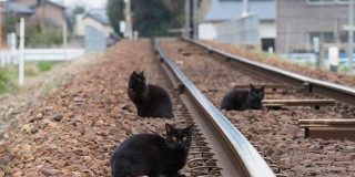 線路に乱入している悪い奴らが複数いた。兄弟かもしれない。「黒い旅団という名の過激派」「とんでもねぇヤツらだ!」 - Togetter