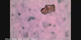 マイクロプラ 海だけでなく「山でも検出」 大気中を浮遊か | NHKニュース