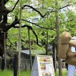 岩手県の応援ポケモンに任命されたイシツブテさん、まったく見えない『足』に注目が集まる – Togetter