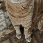 猫さんに定期的に座られて虚無顔になっている猫さんが愛おしい「諦めきったお顔」「この世には2種類の猫がいる」 – Togetter